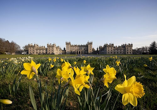 Daffodils at Floors Castle, Kelso, Scottish Borders. Picture Credit : Paul Tomkins / VisitScotland / Scottish Viewpoint Tel: +44 (0) 131 622 7174 E-Mail : info@scottishviewpoint.com This photograph cannot be used without prior permission from Scottish Viewpoint.